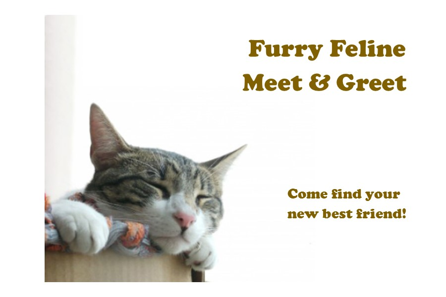 Feline Meet & Greet Button