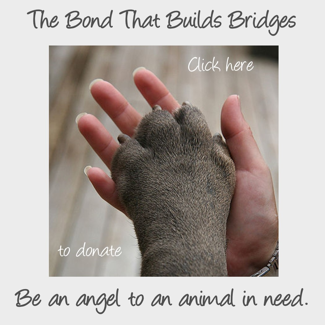 Be an Angel to an Animal in Need