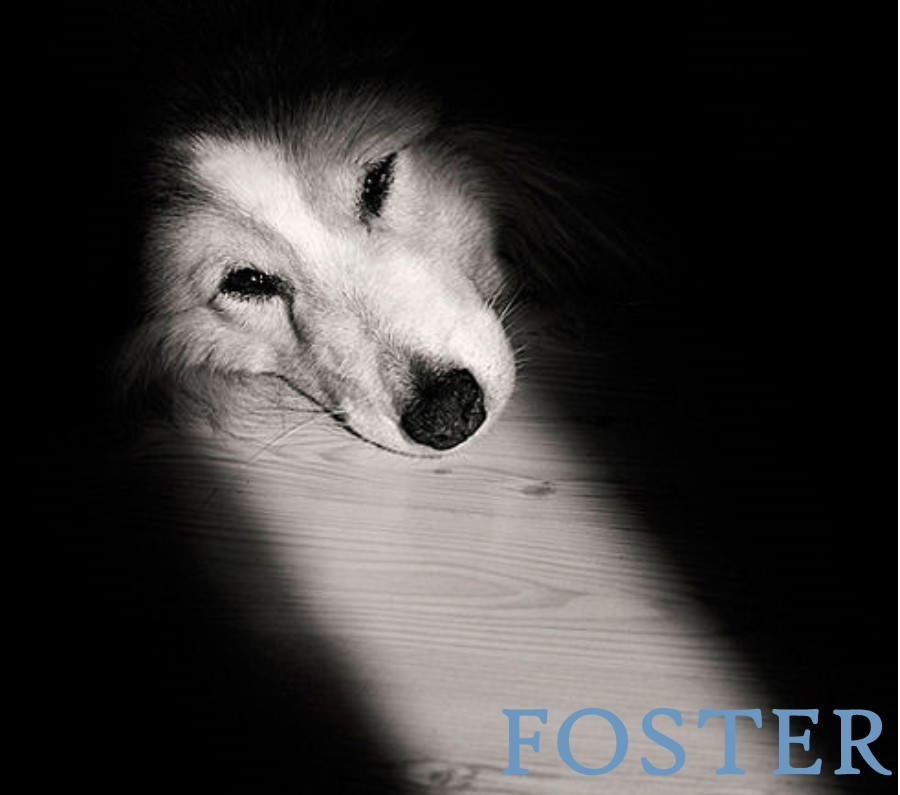 Foster a Dog or Cat