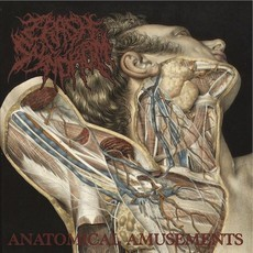CRASH SYNDROM / Anatomical Amusements (CD)