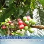 Comunidad de Puente Piedra presenta proyecto para implementar 30 módulos post cosecha de café