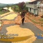 Capacitan catadores de cacao para trabajar con agricultores regionales