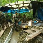 Destruyen laboratorio clandestino de PBC y almácigos con plantaciones ilícitas de coca