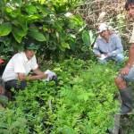 Municipio de Sivia promueve desarrollo de cultivos alternativos en el VRAE