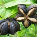 Agricultores del VRAE apuestan por la diversificación de sus cultivos