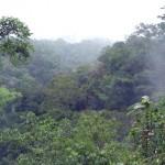 Se fortalecerán investigaciones de IIAP sobre uso de recursos en la Amazonía