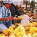 Alistan novedosos concursos de productores por aniversario de caserío La Primavera en Aucayacu
