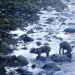 Río que recorre el VRAE se ha convertido en un foco infeccioso que amenaza la salud pública