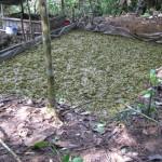 Efectivos policiales intervienen cuatro laboratorios de producción de PBC en Aucayacu