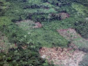 Invocan a firmar acuerdo internacional destinado a frenar la deforestación