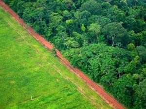 La ciencia es clara: la pérdida de bosques es responsable de la sequía en Brasil