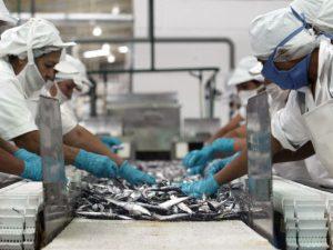 Segunda temporada generará US$900 mlls. en exportaciones pesqueras