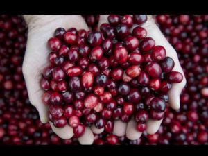 Exportaciones no tradicionales subieron a US$956 millones en octubre