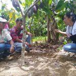 Junín: Coviriali se beneficia con producción de cacao orgánico