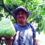 Optimizan productividad agrícola de más de 200 familias de Callahuanca