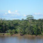Protección de indígenas aislados debe involucrar a poblaciones vecinas