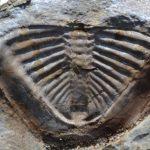 Vraem: Hallan fósiles de valor incalculable en Pichari