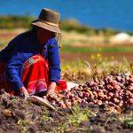 Alistan cumbre de seguro agrario en Lima