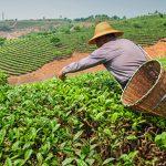 Lima será sede de encuentro agrario
