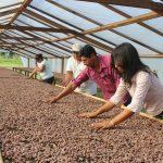 Madre de Dios: Cacaoteros acceden a información para optimizar cultivos y mercados