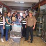 Decomisan 128 animales silvestres en tienda de cercado de Lima