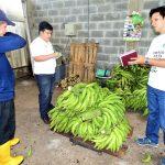 Plátano de San Martín tras nuevos mercados
