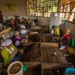 Recuperación de tierras degradadas se consolida con mercado a sus productos