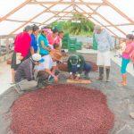 San Martín: Cacao de Nuevo Progreso solicitado por chocolateros de Europa y Australia