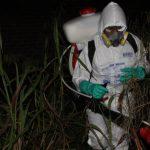 Satipo: Unen esfuerzos para erradicar caracol gigante africano