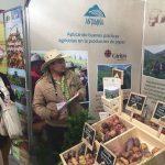 Ancash es el nuevo semillero de papas del Perú