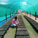 Ayacucho: Recuperarán 600 hectáreas de suelos degradados en Anchihuay