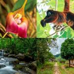 Bosque Vista Alegre de Amazonas podría convertirse en área de conservación regional