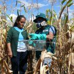 Coordinan control de roedores con agricultores de Ayacucho