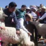 Ejecutan acciones preventivas contra las heladas en siete regiones