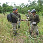 Erradican más de 9 200 hectáreas de planta de coca ilegal en este año