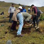 Junín: Campaña de reforestación el ACR Huaytapallana