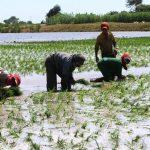 La era digital y su campo de acción en la industria agrícola nacional