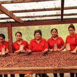 Monzón: Tres organizaciones cafeteras y cacaoteras ganan fondos del Procompite