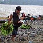 Mujeres wampís exportan a Ecuador plátanos de bosques conservados