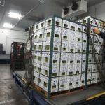 Optimizan consumo de energía en industria agrícola de Piura
