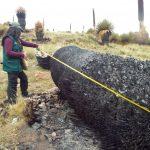 Puno: Constatan quema de más de mil árboles de puya de Raimondi
