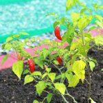 San Martín: Festival gastronómico promocionará biodiversidad de cultivos amazónicos
