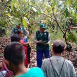 Ucayali: Cacaoteros capacitados en manejo integrado de plagas