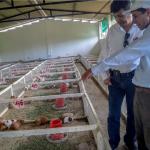 Cajamarca: Invierten más de S/2 millones en beneficio de 238 productores