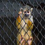 Estado intensificó intervenciones por tráfico ilegal de fauna silvestre en 2017