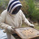Importación de abejas no pone en riesgo producción apícola de Perú