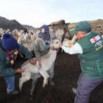 Minagri culmina entrega de kits veterinarios en Huancavelica