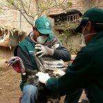 Minagri preserva estatus sanitario en aves de crianza doméstica en el Vraem