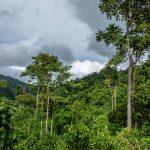 Minam reconoce dos nuevas áreas de conservación en Amazonas