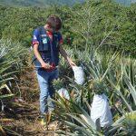Pichari: Estudio de sanidad vegetal logra opinión favorable